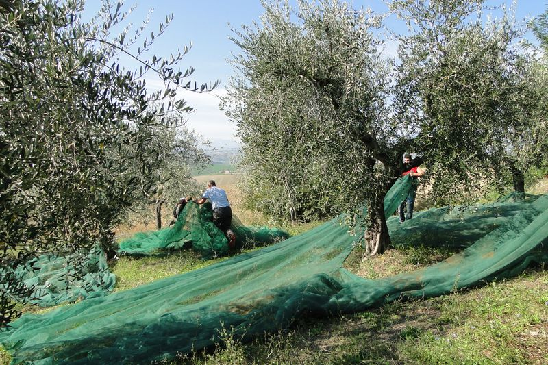 Abruzzo, where our olive trees have their home
