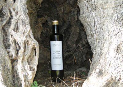 oli extravergine oliva abruzzo-11