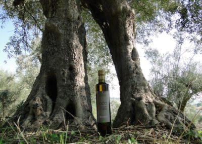 oli extravergine oliva abruzzo-14