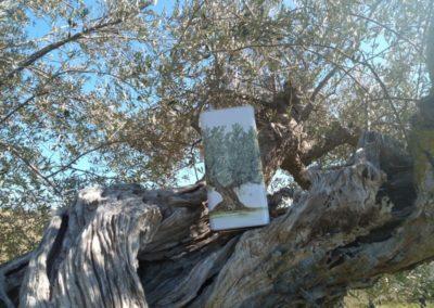 oli extravergine oliva abruzzo-22