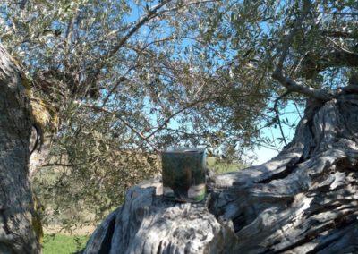 oli extravergine oliva abruzzo-25