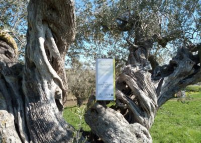 oli extravergine oliva abruzzo-27
