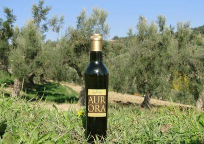 oli extravergine oliva abruzzo-3