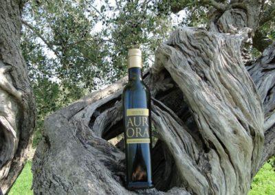 oli extravergine oliva abruzzo-4