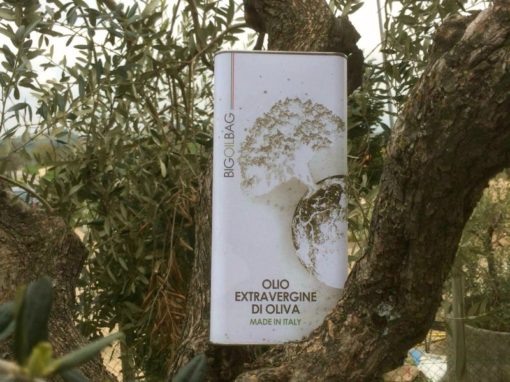 olio extravergine di oliva in lattina